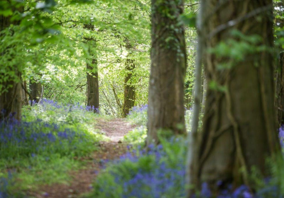 Bluebell Wood Photo Shoot