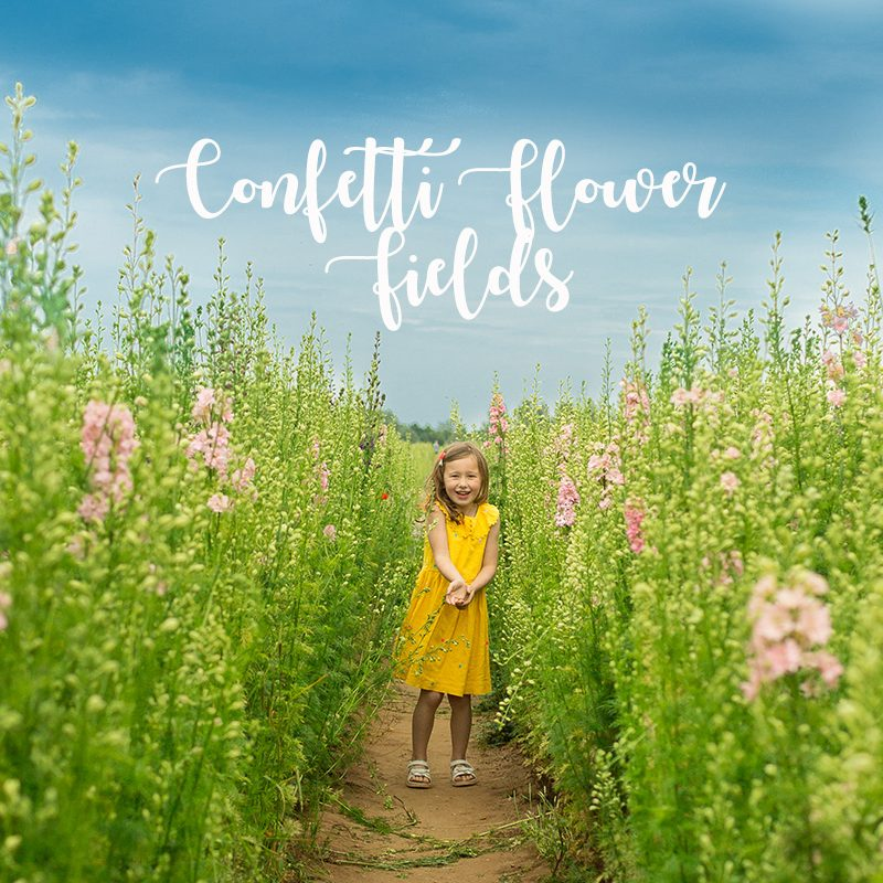 confetti flower fields mh