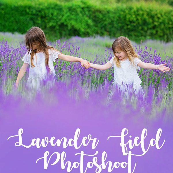 lavender photoshoot mh